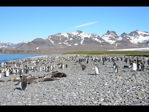 Silversea Antarctica Cruise  3-21 January 2014