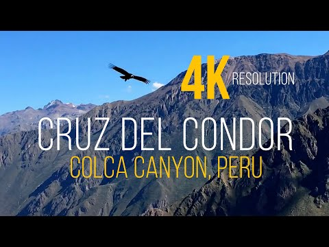 Cruz del Condor Peru - Colca Canyon (4K)