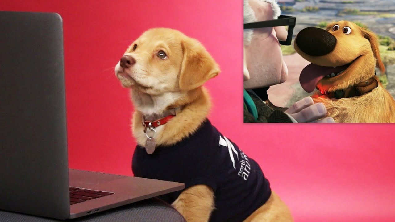 Puppies Critique Famous Movie Dogs