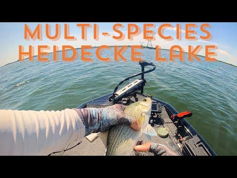 Heidecke Lake- Multi Species. Plus First Muskie (baby)