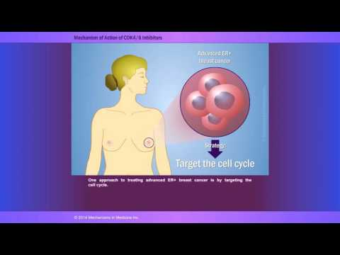 Expert Perspectives: Rationale for CDK 4/6 Inhibition in Breast Cancer