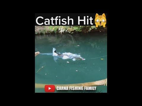 Catfish Hit Topwater 🎣 #fishing #catfish #shorts