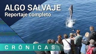 'Algo salvaje' COMPLETO | Crónicas