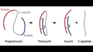 A legjobb zsírégető peptidek. TG® zökkenőmentes jógaruházat