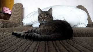 Беременность кошки Сарочки
