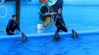Красивейшее шоу дельфинов.