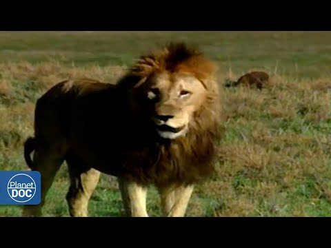 La importancia del Ngorongoro