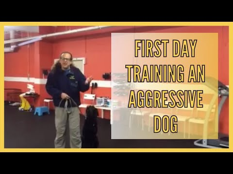 Aggressive dog first day arrival and strategy for training, first day training