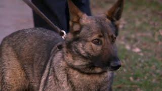 Send in the Dogs - Season 2, Episode 5