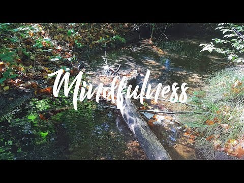 Forest Creek︱Yoga/Nature/Meditation/Relax/Stress/Power/Energy/Health/Sleep/Heal/Music/Sound/HD