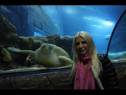 All Animals Of Sea Life London Aquarium Youtube