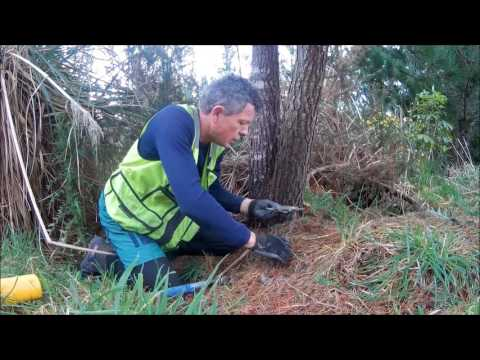 How To Do Possum Trapping In NZ