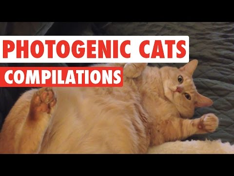 Photogenic Cats Video Compilation 2016