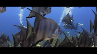 Amazing Encounter With Atlantic Spadefish! GoMEDIA Underwater Photography Course Highlights