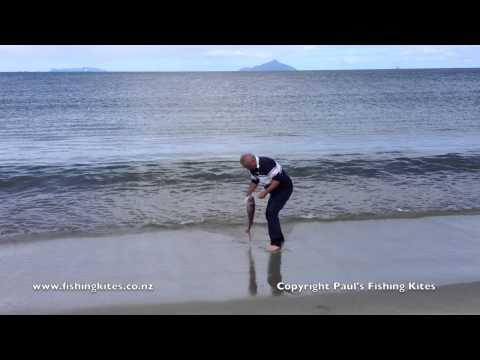 Kite Fishing Waipu Cove