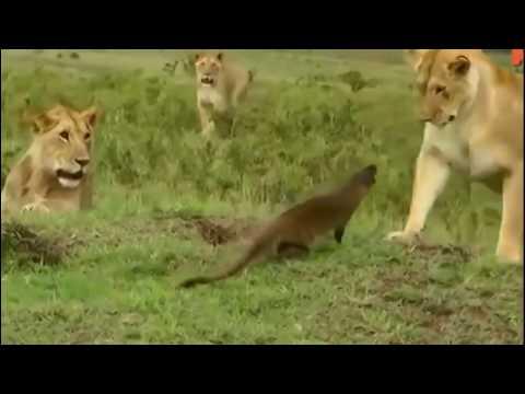Животные атакуют - Ruslar.Biz