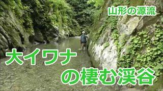 大イワナの棲む渓谷~山形の渓~ / みちのく釣りの旅 フライフィッシング(4K) Fly Fishing Tohoku-Jp