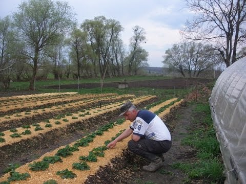 Выращивание и уход за земляникой 46