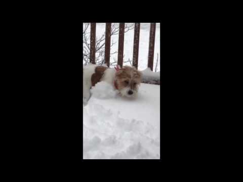 Puppy Enjoys First Snow Day as Winter Storm Blankets Northeast