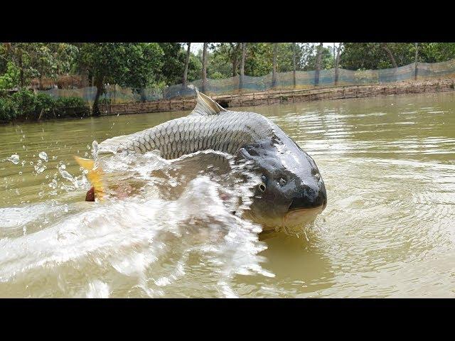 Underwater Carp Fishing | Best Underwater Carp Fish Fishing Techniques
