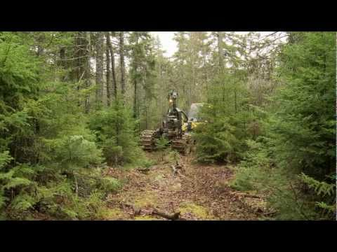 Tide Mill Enterprises - Managing the Forest of Tomorrow, Today