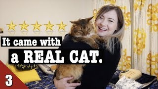 Gambar cover I Stayed at the BEST AirBnb in Tokyo 🐈 Japanese AirBnb Room Tour
