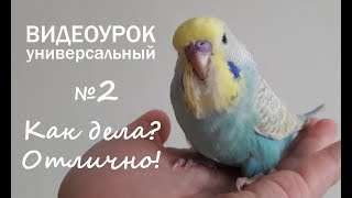 """🎧 Учим попугая говорить. Урок 2: """"Как дела? Отлично!"""""""