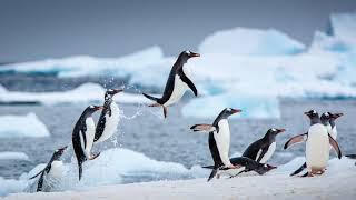 Картинка птицы. Зима, пингвины, прыжки, вода, лёд   Слика на птица. Зима, пингвини, скокање, вода