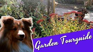 Garden Tour with a Shetland Sheepdog