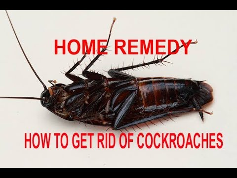 how to get rid of cockroaches permanently in a week home remedy youtube. Black Bedroom Furniture Sets. Home Design Ideas