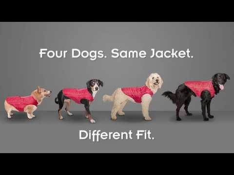 Surf N Turf Dog Life Jacket - How To Measure Your Dog For Coats & Harnesses