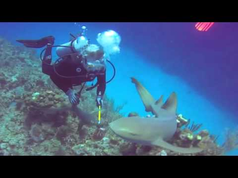 Spearing Lionfish In Belize And Feeding Them To The Sharks