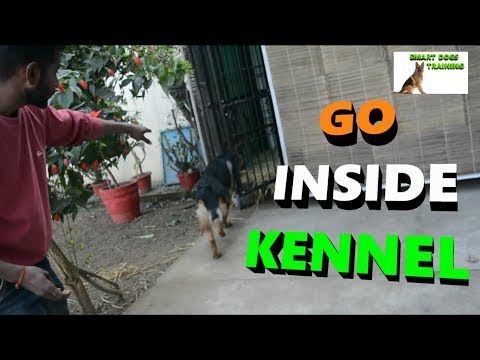 How To Train Your Dog To Go INSIDE KENNEL | Dog Training | SSSDT |