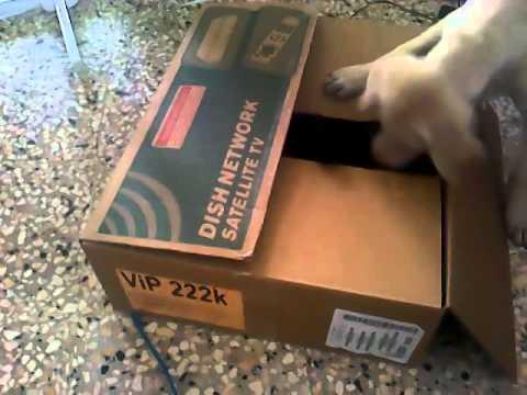 Dog vs Cat in a Box final round