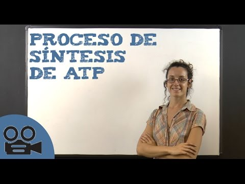 Proceso de síntesis de ATP