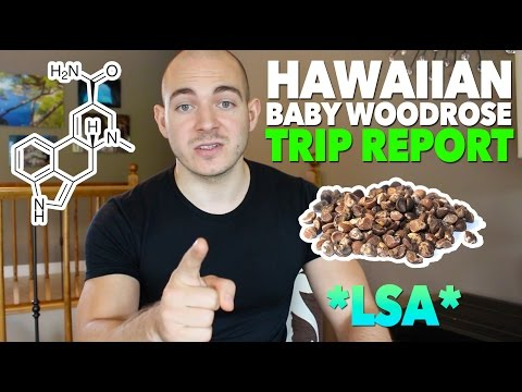 "Search Result for ""bad trip report lsa hawaiian baby woodrose 12 seeds ..."