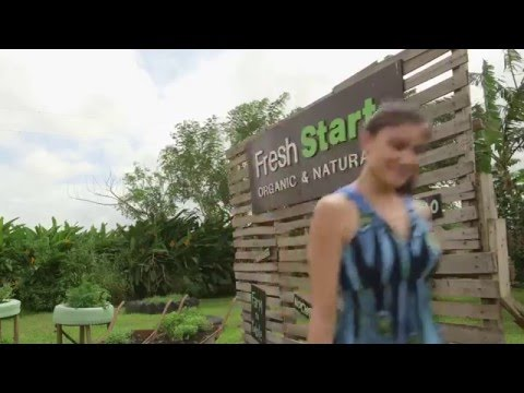 "A ""Fresh Start"" Organic Farm to Table experience in the Philippines"