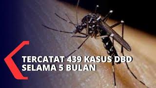 Demam berdarah dengue (DBD) adalah penyakit menular yang disebabkan oleh virus dengue yang dibawa ol.