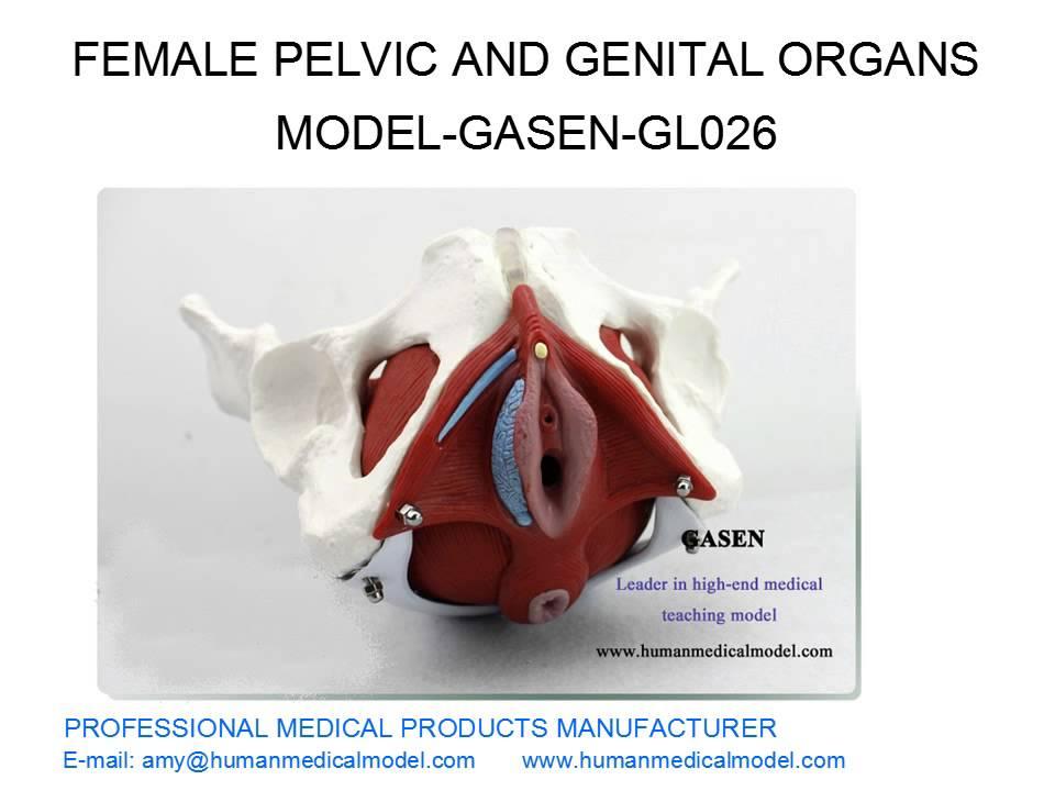 Женские гениталии смотреть бесплатно фото 565-66