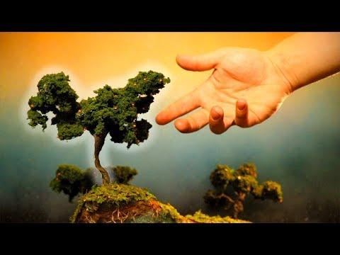 MAKING A MINI ORANGE TREE!