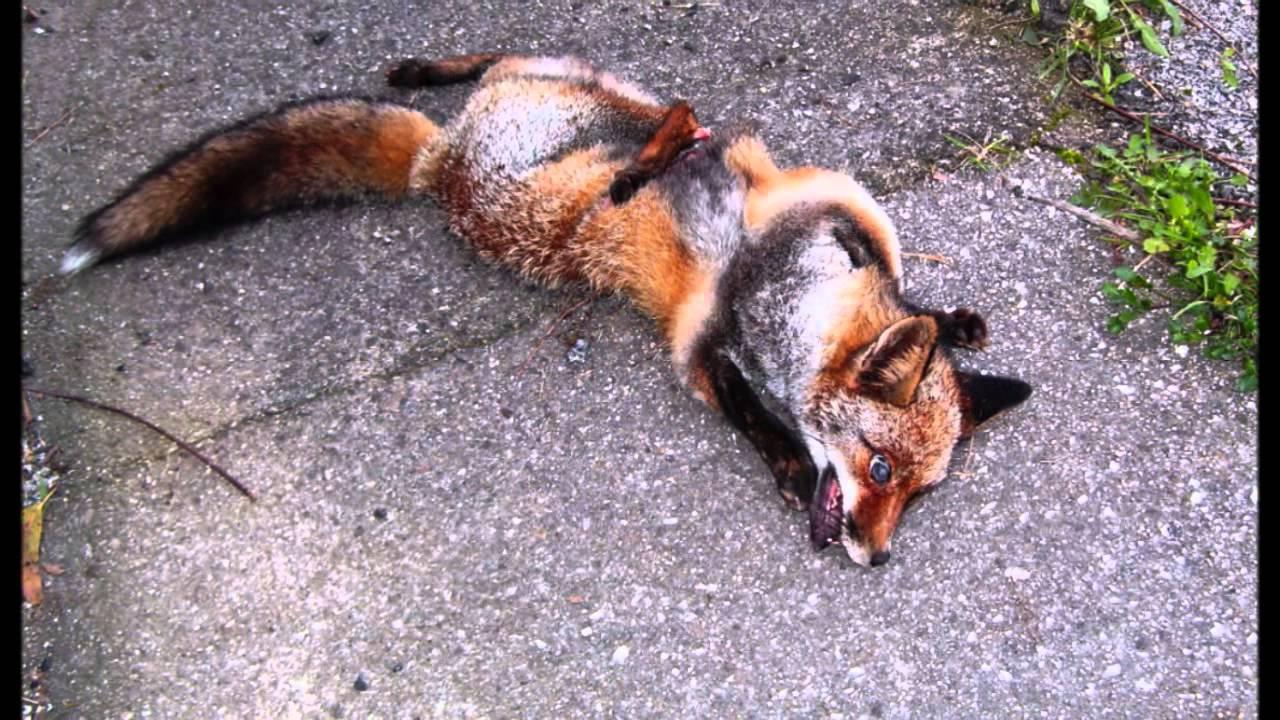 Atropello De Animales En Carreteras 10 Millones De