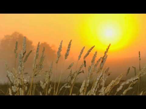 Milieu - Sun-Day