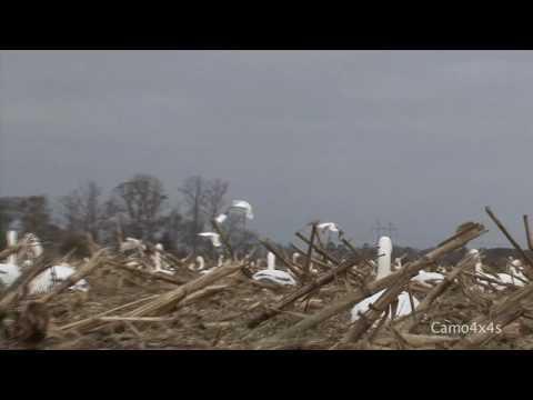 Ultimate Maryland Delaware Goose Hunting (HD)