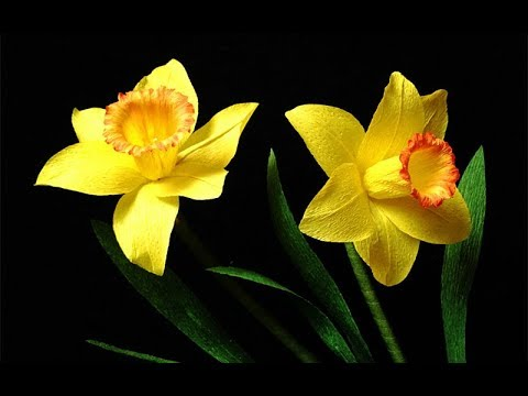 Abc Tv How To Make Daffodils Paper Flower From Crepe Paper Craft Tutorial Youtube