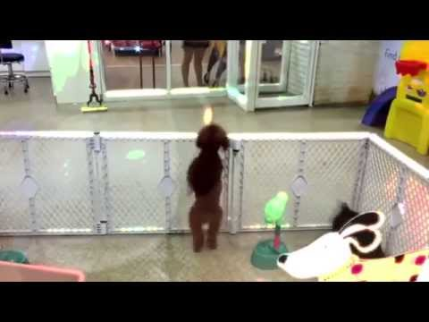 Kevin & Liz - Watch this dog jump around