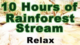 rainforest relaxation 10 hours of rainforest stream and sounds in full hd
