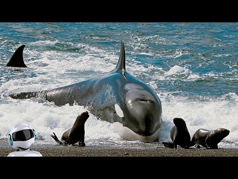 Хищные Рыбы в Деле / На Что Способны Сом, Акула, Мурена, Щука