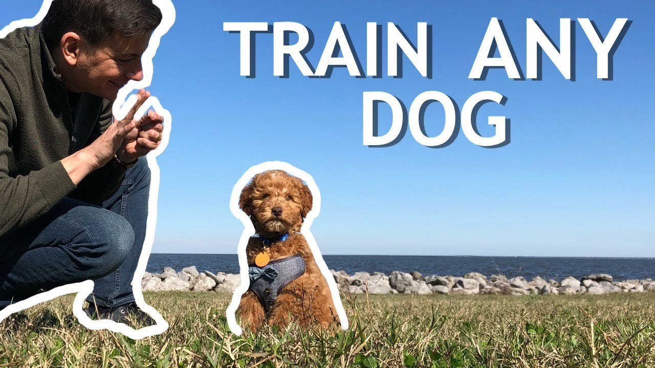 Watch How to Train Your New Dog by Zak George