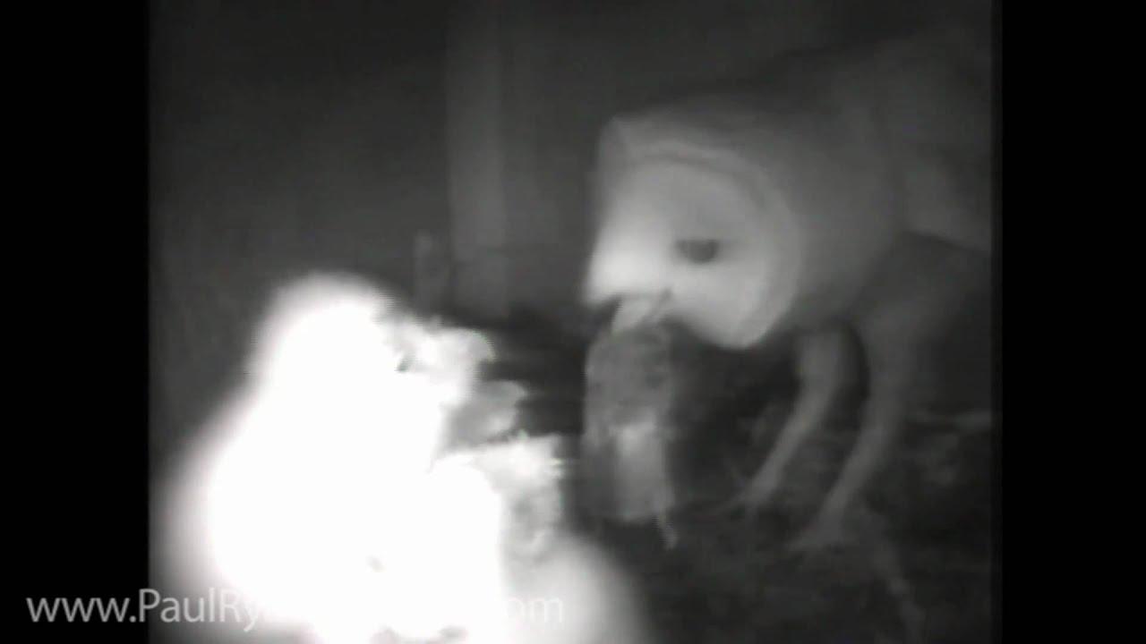 Barn Owl Nest Box Remote Camera Setup - YouTube