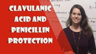 Clavulanic Acid (Clavulanate) and Penicillin Protection